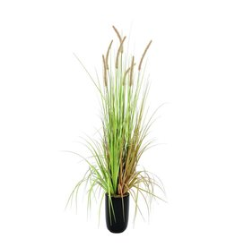 EUROPALMS EUROPALMS Fountain grass, 120cm