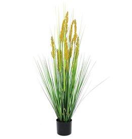 EUROPALMS EUROPALMS Parrot grass, 120cm