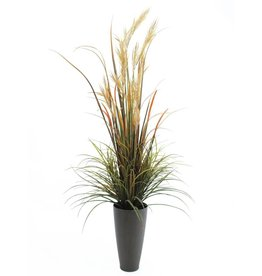 EUROPALMS EUROPALMS River grass September, 175cm