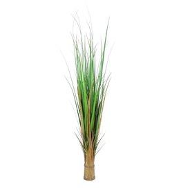 EUROPALMS EUROPALMS Fox grass, 150cm