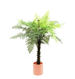 EUROPALMS EUROPALMS Woodwardia tree, 180cm