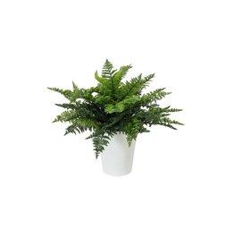 EUROPALMS EUROPALMS Fern bush in pot, 51 leaves, 48cm