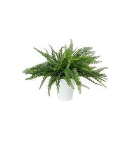 EUROPALMS EUROPALMS Fern bush in pot, 62 leaves, 48cm