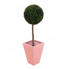 EUROPALMS EUROPALMS Boxwood tree, 110cm, d=60cm