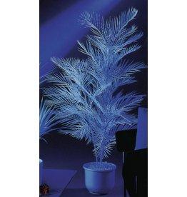 EUROPALMS EUROPALMS Kentia Palmtree, uv-white, 90cm