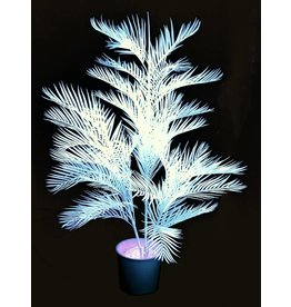 EUROPALMS EUROPALMS Kentia Palmtree, uv-white, 170cm