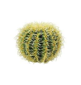 EUROPALMS EUROPALMS Barrel Cactus, 27cm