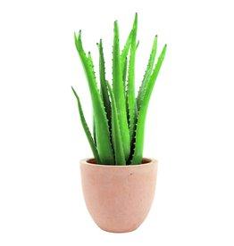 EUROPALMS EUROPALMS Aloe vera plant, 63cm