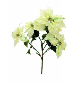 EUROPALMS EUROPALMS Poinsettia bush, cream, 60cm