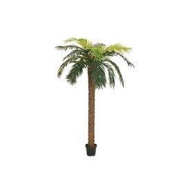 EUROPALMS EUROPALMS Phoenix palm deluxe, artificial plant, 300cm