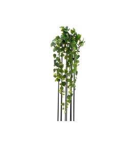 EUROPALMS EUROPALMS Philodendron Bush, Premium, 70cm