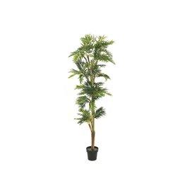 EUROPALMS EUROPALMS Parlor palm, artificial plant, 210cm