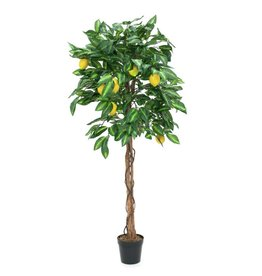 EUROPALMS EUROPALMS Lemon tree, 150cm