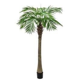 EUROPALMS EUROPALMS Phoenix palm tree luxor, 300cm