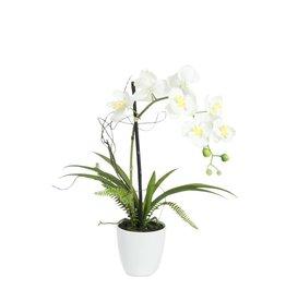 EUROPALMS EUROPALMS Orchid arrangement 1