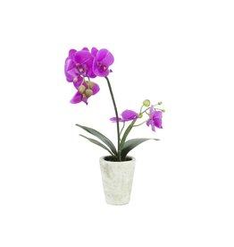 EUROPALMS EUROPALMS Orchid arrangement 3