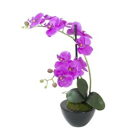 EUROPALMS EUROPALMS Orchid arrangement 4