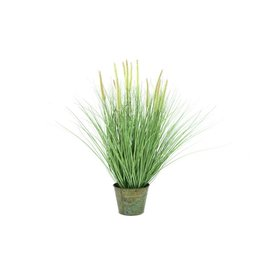 EUROPALMS EUROPALMS Ornamental blooming grass, 70cm
