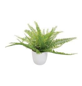 EUROPALMS EUROPALMS Fern bush in pot, 26 leaves, 27cm