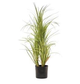 EUROPALMS EUROPALMS Dracena bush, 80cm