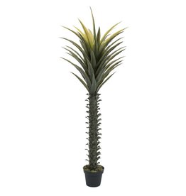EUROPALMS EUROPALMS Yucca palm, 165cm