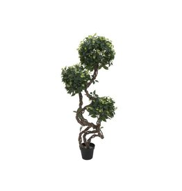 EUROPALMS EUROPALMS Ficus spiral trunk, 160cm