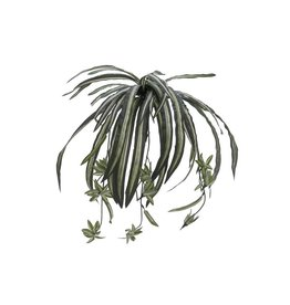 EUROPALMS EUROPALMS Spider plant, 60cm