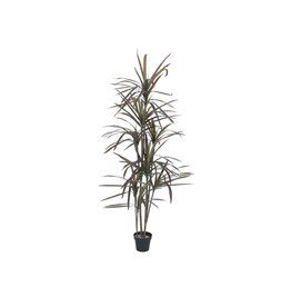 EUROPALMS EUROPALMS Dracaena, green-red, 180cm