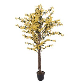 EUROPALMS EUROPALMS Forsythia tree with 4 trunks, yellow, 150 cm