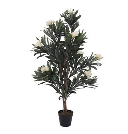 EUROPALMS EUROPALMS Oleander tree, white, 120 cm