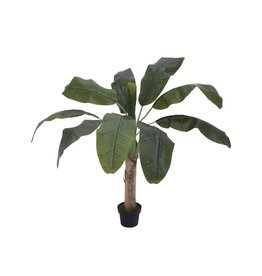 EUROPALMS EUROPALMS Banana tree, 100cm