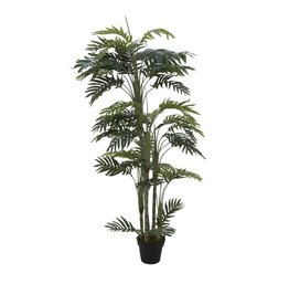 EUROPALMS EUROPALMS Phoenix palm with multiple trunk, 170cm