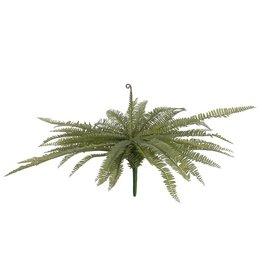 EUROPALMS EUROPALMS Boston fern, green, 70cm
