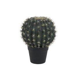 EUROPALMS EUROPALMS Barrel Cactus, 34cm