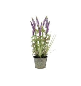 EUROPALMS EUROPALMS Lavender grass, 46cm