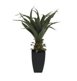 EUROPALMS EUROPALMS Agave plant with pot, 75cm