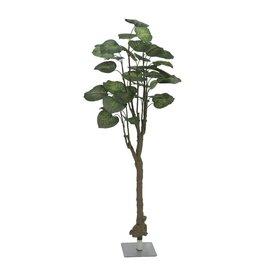 EUROPALMS EUROPALMS Pothos tree, 150cm