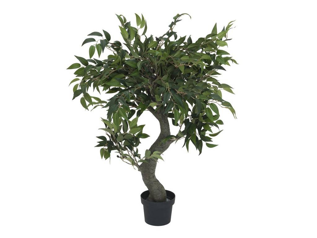 EUROPALMS EUROPALMS Ficus Forest Tree, 80cm