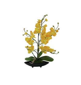 EUROPALMS EUROPALMS Orchid Arrangement EVA, yellow