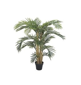 EUROPALMS EUROPALMS Kentia palm tree, 140cm