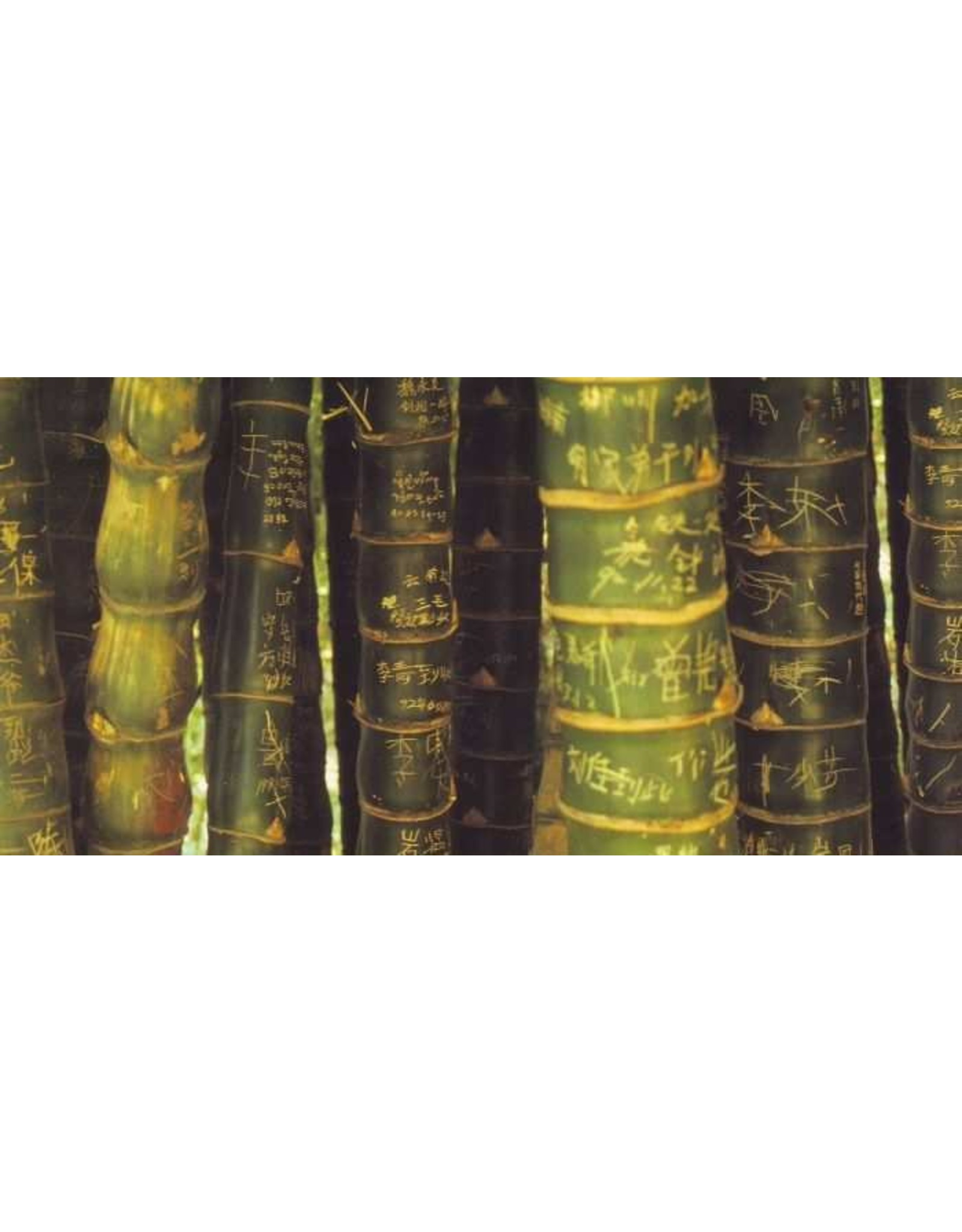 Tushita postkaart Bamboe Panorama