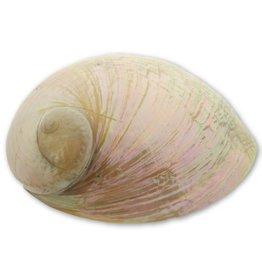 Abalone shell cream