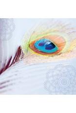 ZintenZ postcard Peacock feather