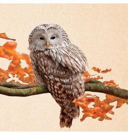 ZintenZ postcard Owl