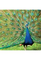ZintenZ postcard Peacock