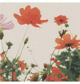 ZintenZ postcard Poppy