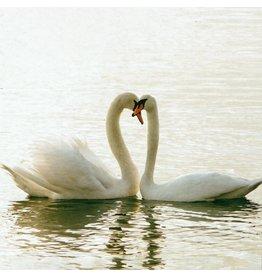 ZintenZ postcard Swans
