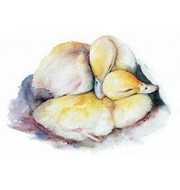ZintenZ postcard Ducks