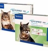 Effipro DUO Katze