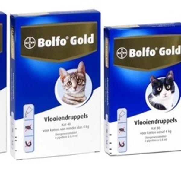 Bolfo Gold Katze
